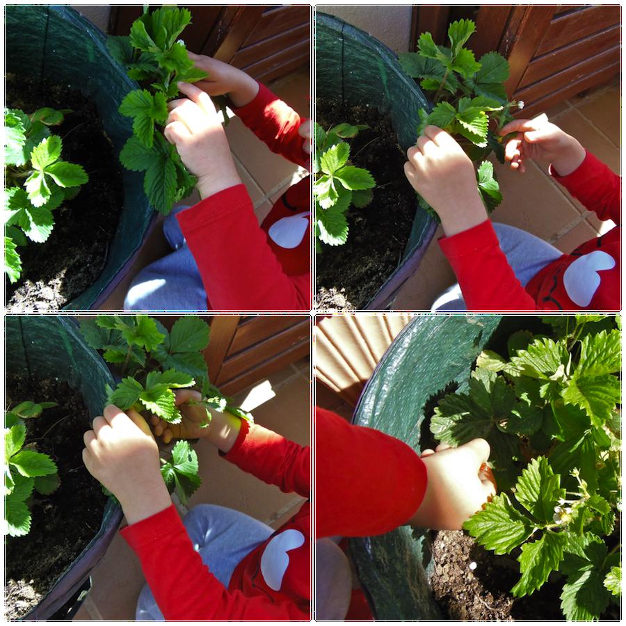 Cuidar plantas exterior care of plants outdoor for Como cuidar las plantas ornamentales
